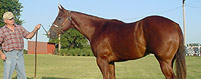 Equine Mortality Insurance