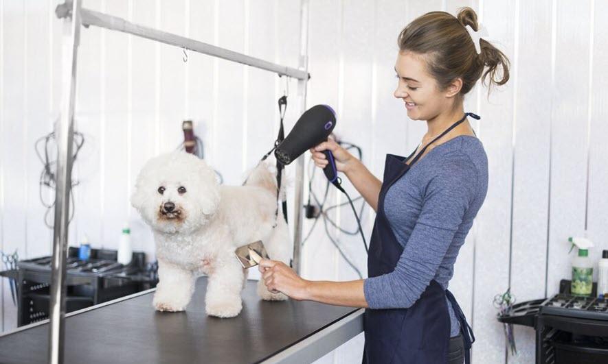 Pet Grooming Insurance Get Dog Grooming Insurance The Hartford